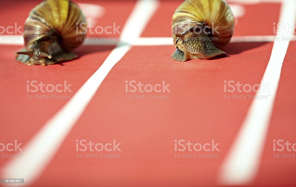 Snail competition royalty-free stock photo
