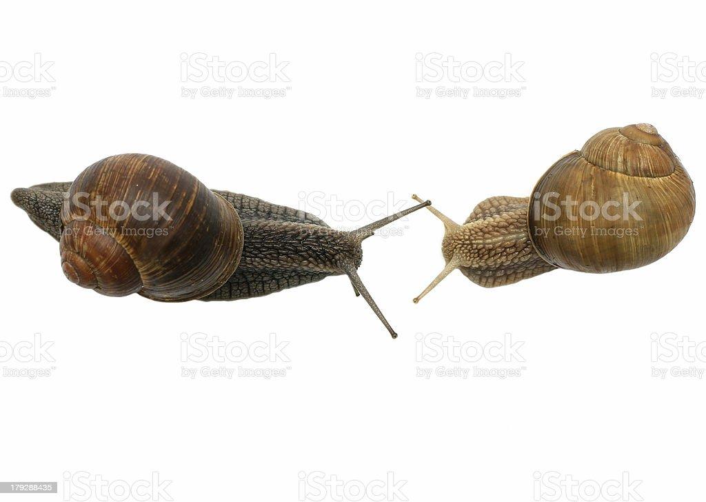 Snail Conversation royalty-free stock photo