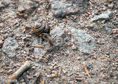 Snail crawling along a rocky path
