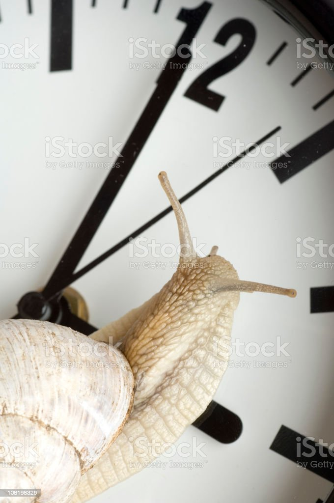 Snail Crawling Along Face of Clock stock photo