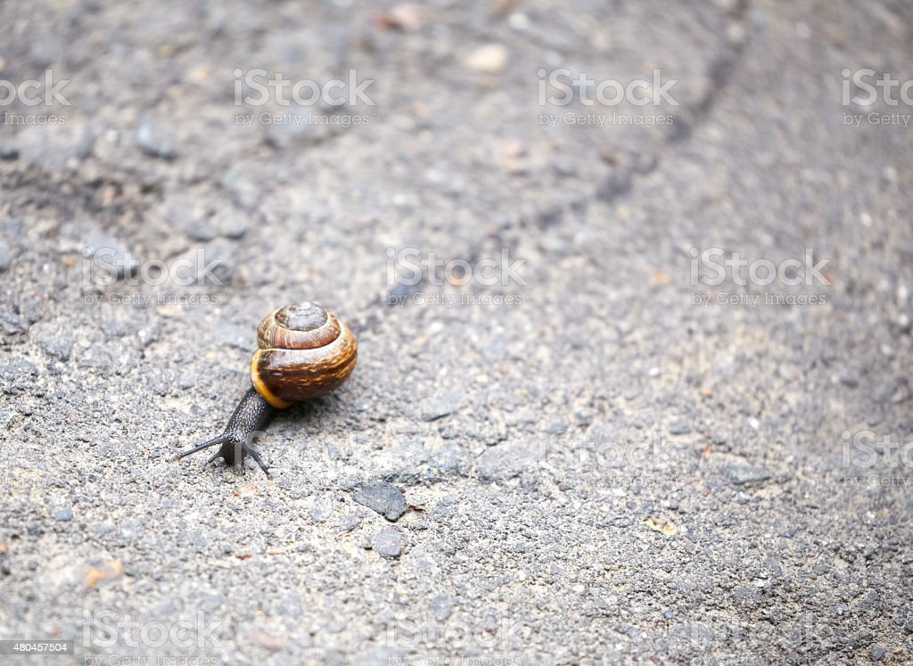 Snail crawling on the road leaving a trail stock photo