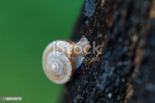 Snail crawling on the tree