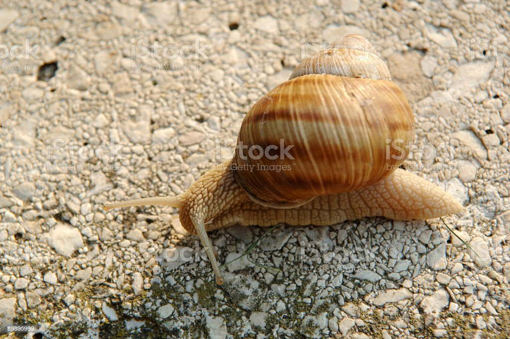 Snail crawling to its destination royalty-free stock photo