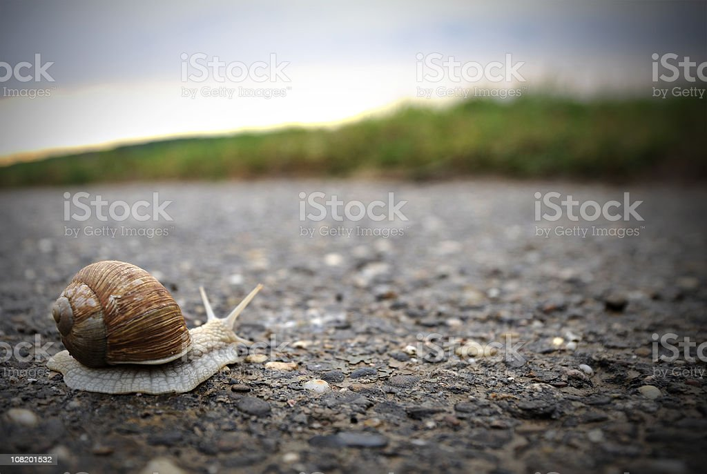 Snail Crossing Road Towards Grass stock photo