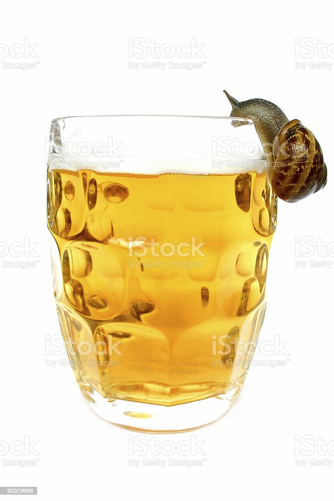 Snail Drinking stock photo