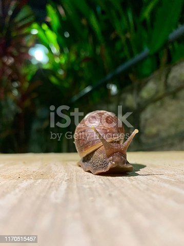 Snail encounter in the backyard pavement at night