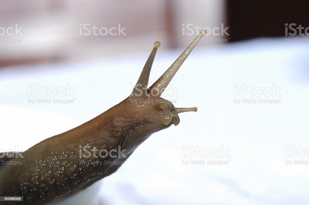 Snail Face royalty-free stock photo