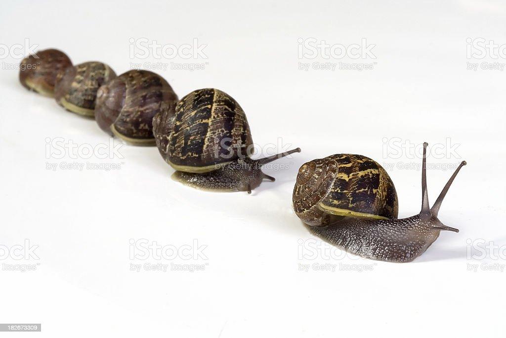 Snail Family royalty-free stock photo