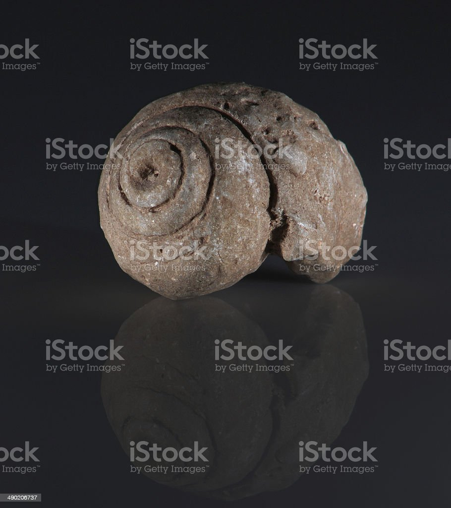 Snail fossil stock photo