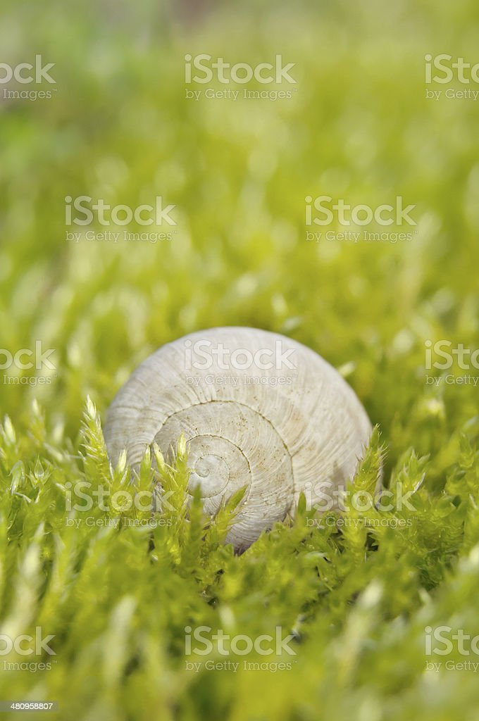 Snail house in green stock photo