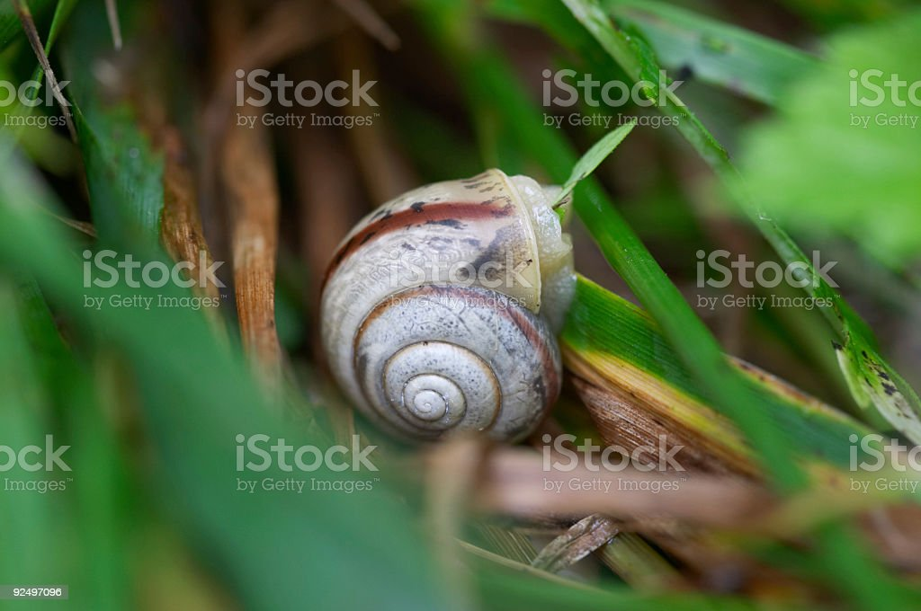 snail in forest royalty-free stock photo