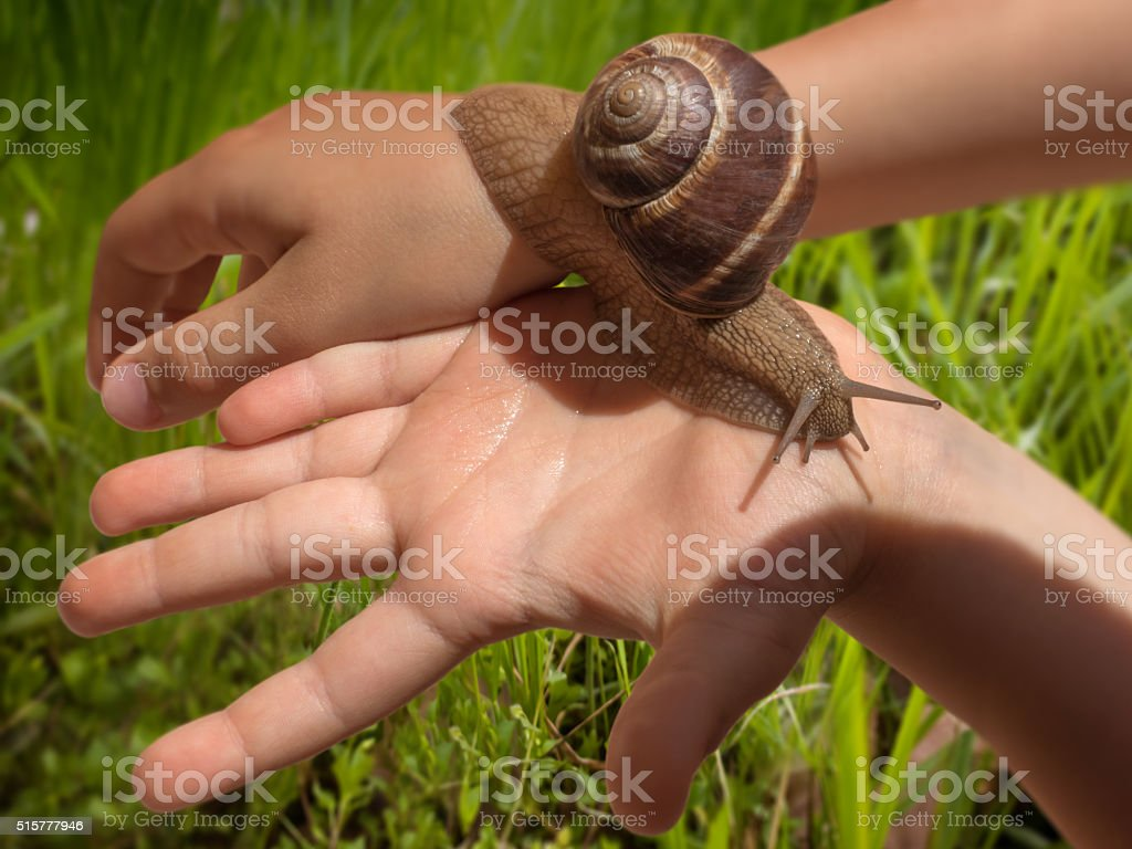 Snail in kid's hands with green grass background stock photo