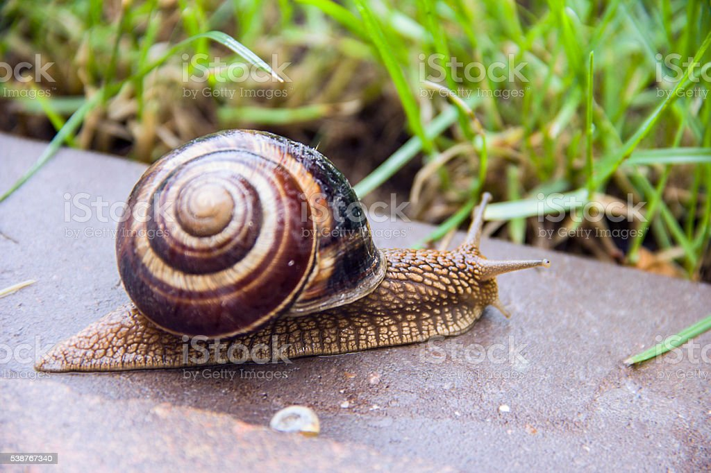 Snail in macro close-up blurred background stock photo