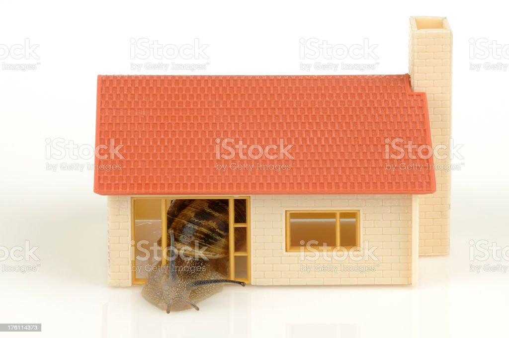 Snail in Model Home royalty-free stock photo