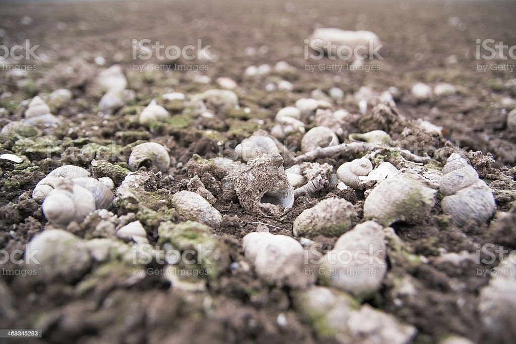 Snail in the mud royalty-free stock photo