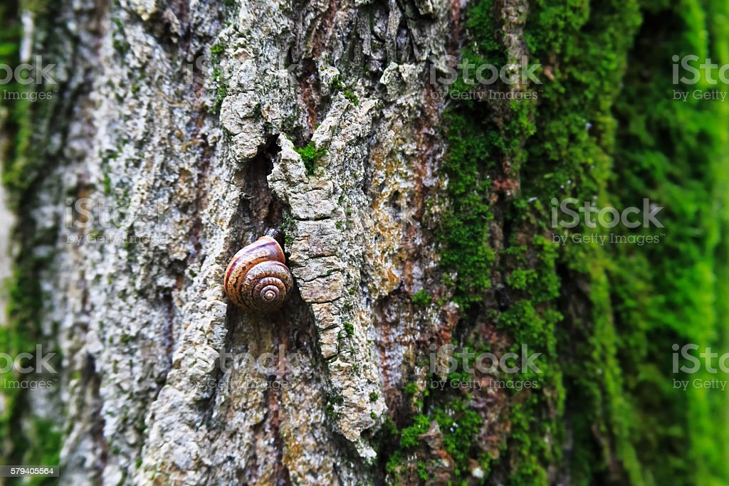 Snail in the woods stock photo