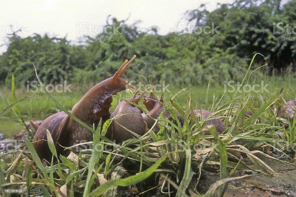 Snail Kingdom ! stock photo