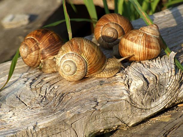 Snail meeting in evening sun stock photo