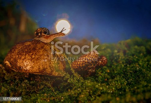 A snail on a boletus against the background of the moon. Mushroom clam. Macro. Night. Beautiful bokeh.