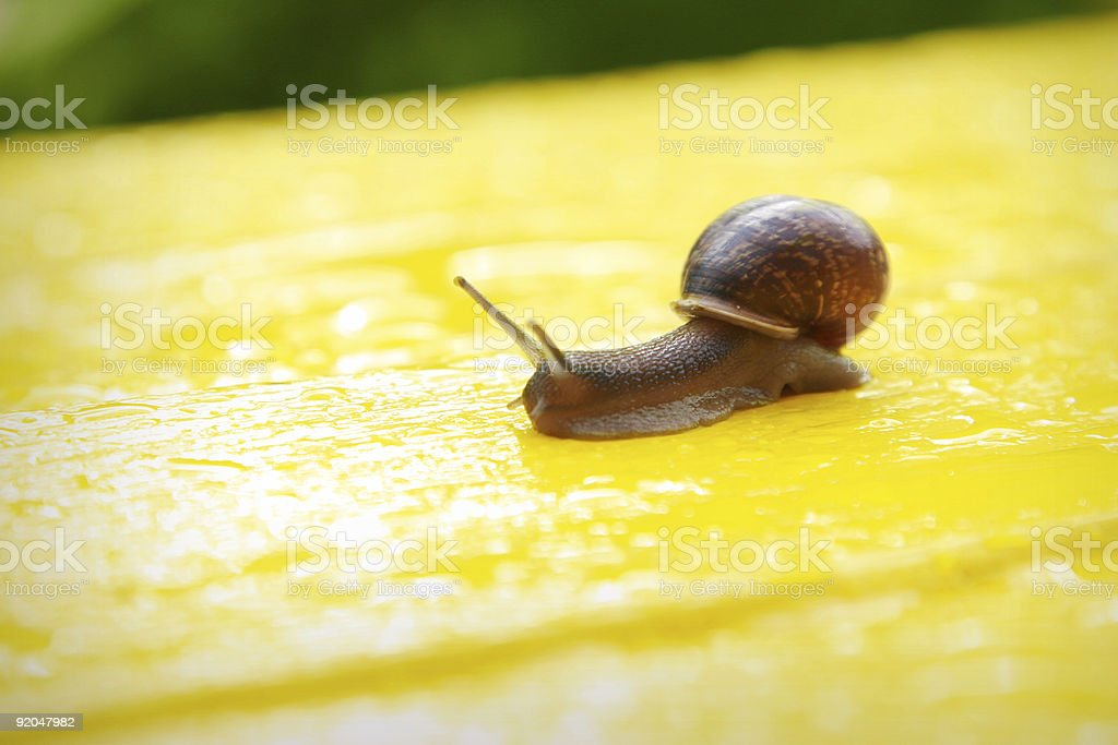 Snail on a bright yellow bench royalty-free stock photo