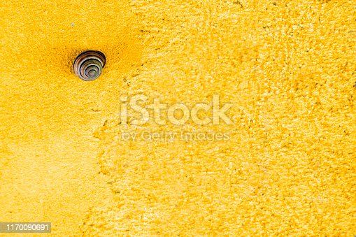 Snail on a bright yellow wall