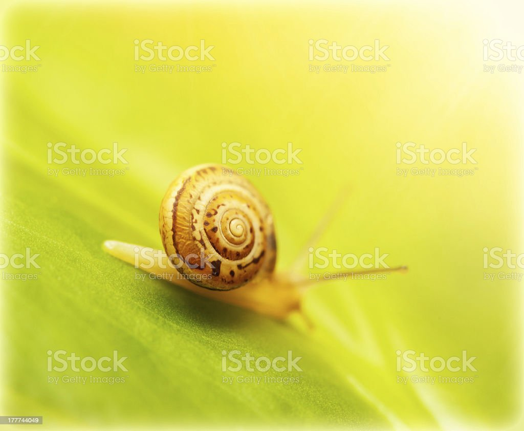 Snail on green leaf royalty-free stock photo