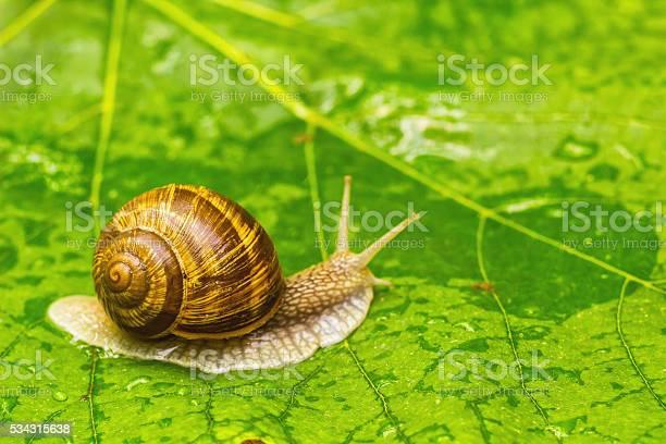 Snail on green leaf picture id534315638?b=1&k=6&m=534315638&s=612x612&h=y67927b4uraoenck8qcjju8ueeedl dthrjbsaezqiy=