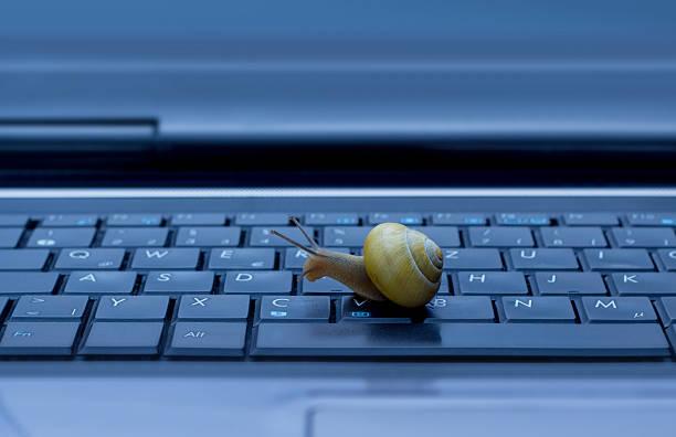 snail on keyboard - langzaam stockfoto's en -beelden