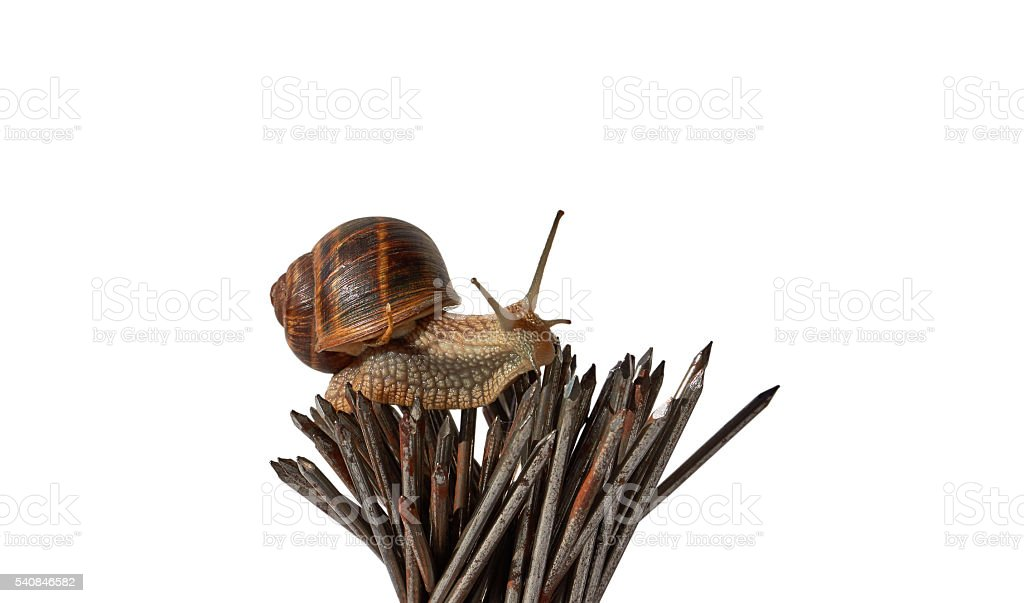 Snail on nails stock photo