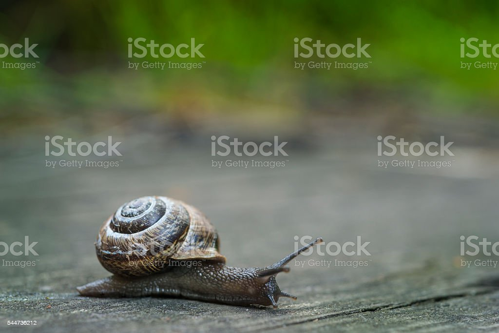 Snail on old wooden surface stock photo