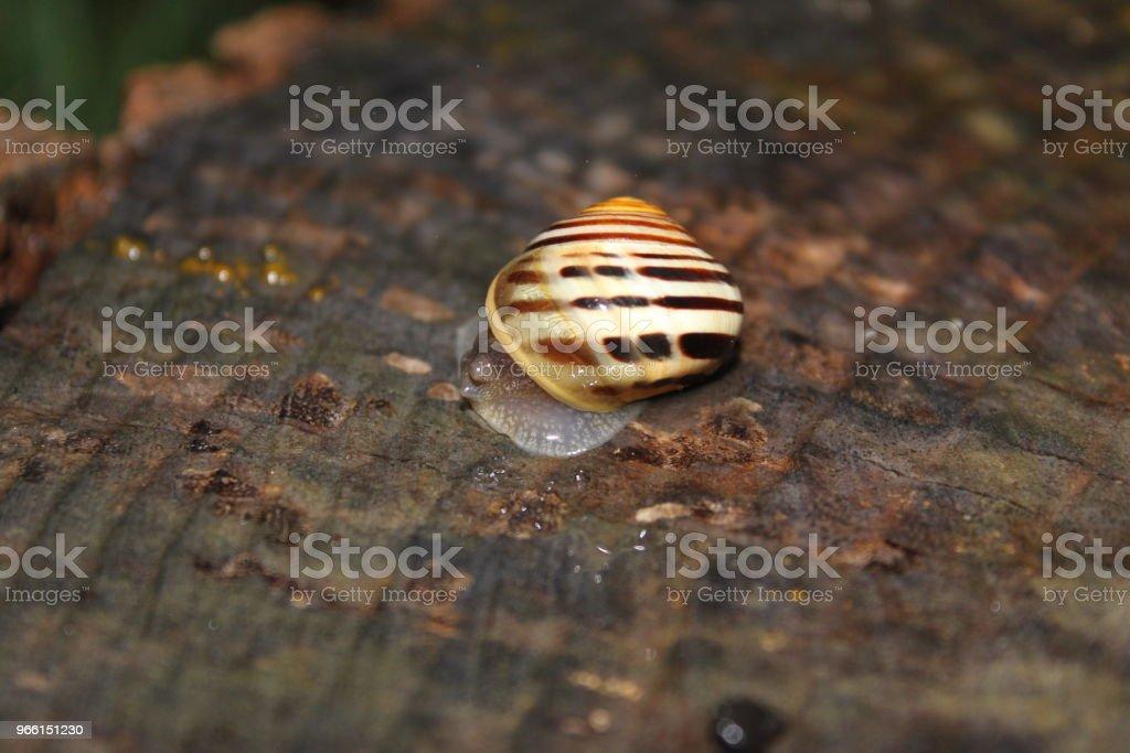 Snigel på regnig dag - Royaltyfri Blöt Bildbanksbilder