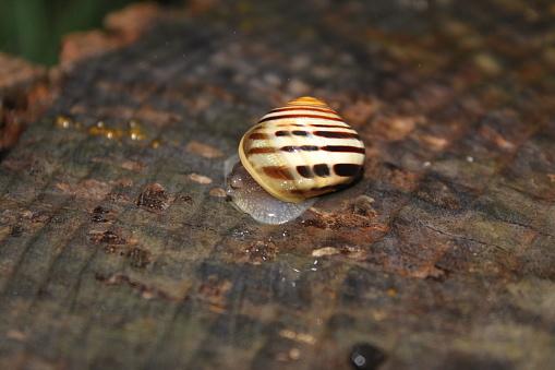Snigel På Regnig Dag-foton och fler bilder på Blöt