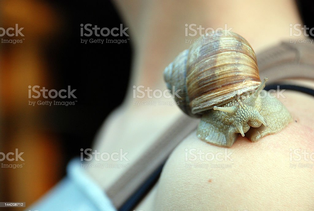 Snail on the girl's shoulder stock photo