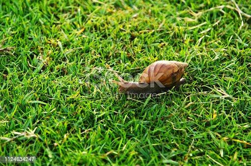Snail On The Green Grass