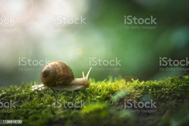 Snail on the moss picture id1139918730?b=1&k=6&m=1139918730&s=612x612&h=ujtavg7jnjkvzuiwva9skqsra3n4udcmlcd5juuzksc=
