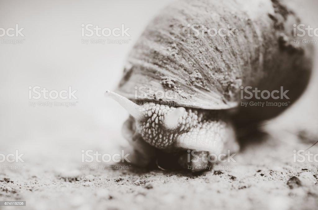 蝸牛在路上。 免版稅 stock photo