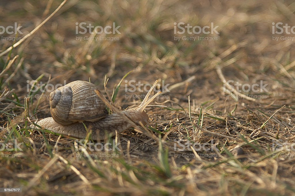 Snail on the road royalty-free stock photo