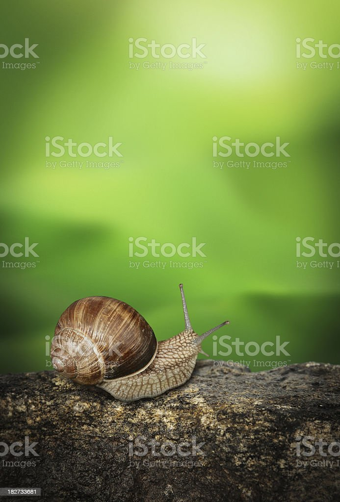 Snail on the Stone with Green Foliage Background royalty-free stock photo