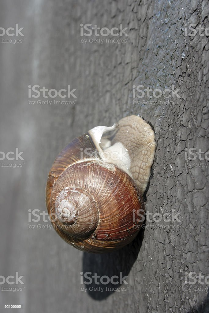 Snail on the Wall stock photo