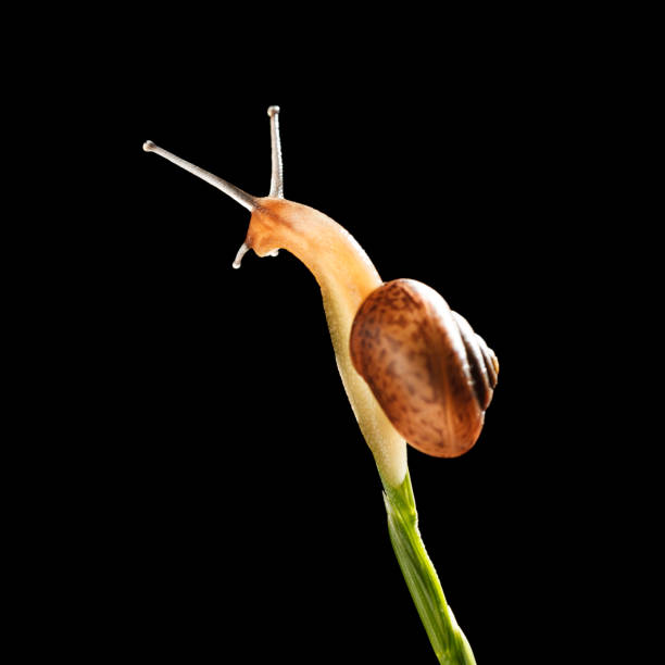 Snail on top of grass stock photo