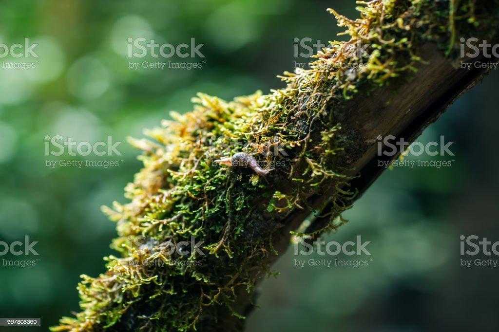 Caracol no ramo de árvore em floresta - foto de acervo