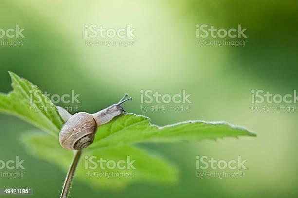 Snail picture id494211951?b=1&k=6&m=494211951&s=612x612&h=usi1zz vmxbwz xjzfr0fvsz96jvf1m2bosgxf3o qk=