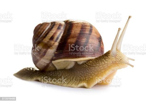 Snail picture id512519495?b=1&k=6&m=512519495&s=612x612&h=weold4bvq2chmnt1i7tinurqu2ao 93wfdhvaaxuabc=