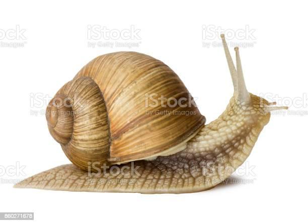 Snail picture id860271678?b=1&k=6&m=860271678&s=612x612&h=3am0nvgamv hrqpfridh5 7w4 zpz5k36dxbvner2ri=