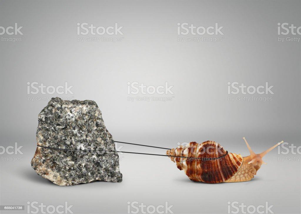 Snail pulling big stone, persistence concept stock photo