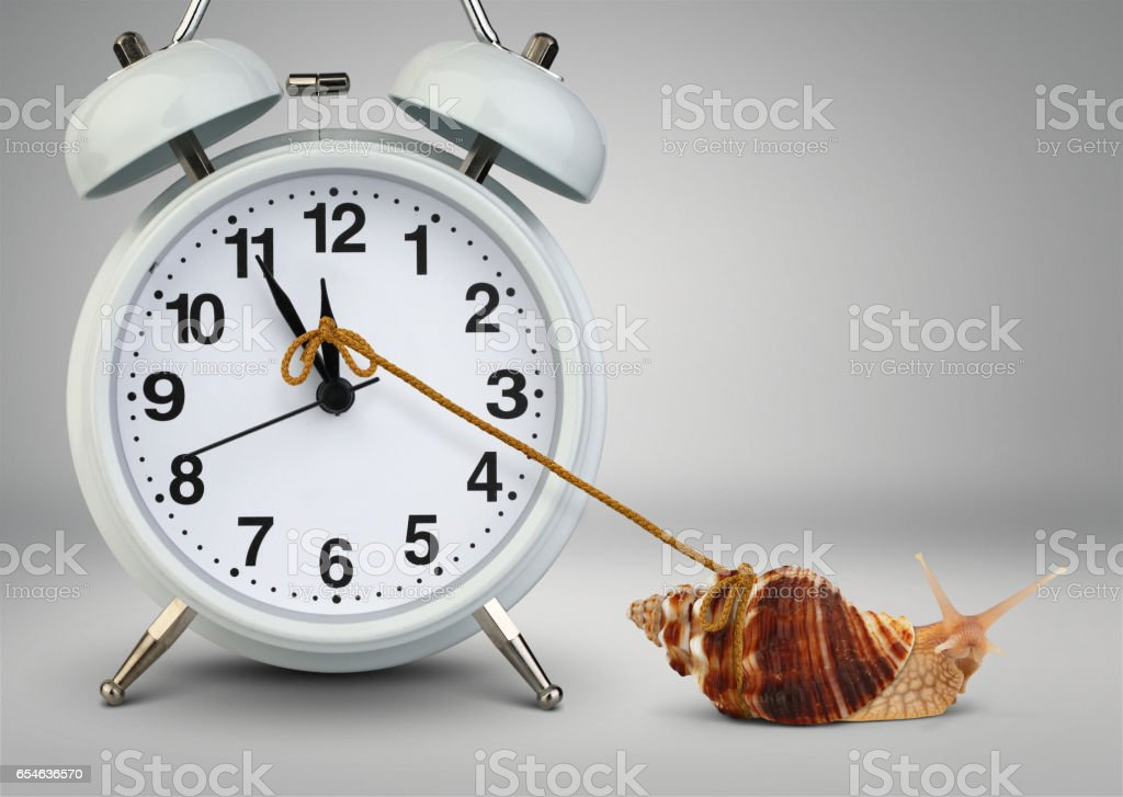 Snail pulling clock, time management concept stock photo
