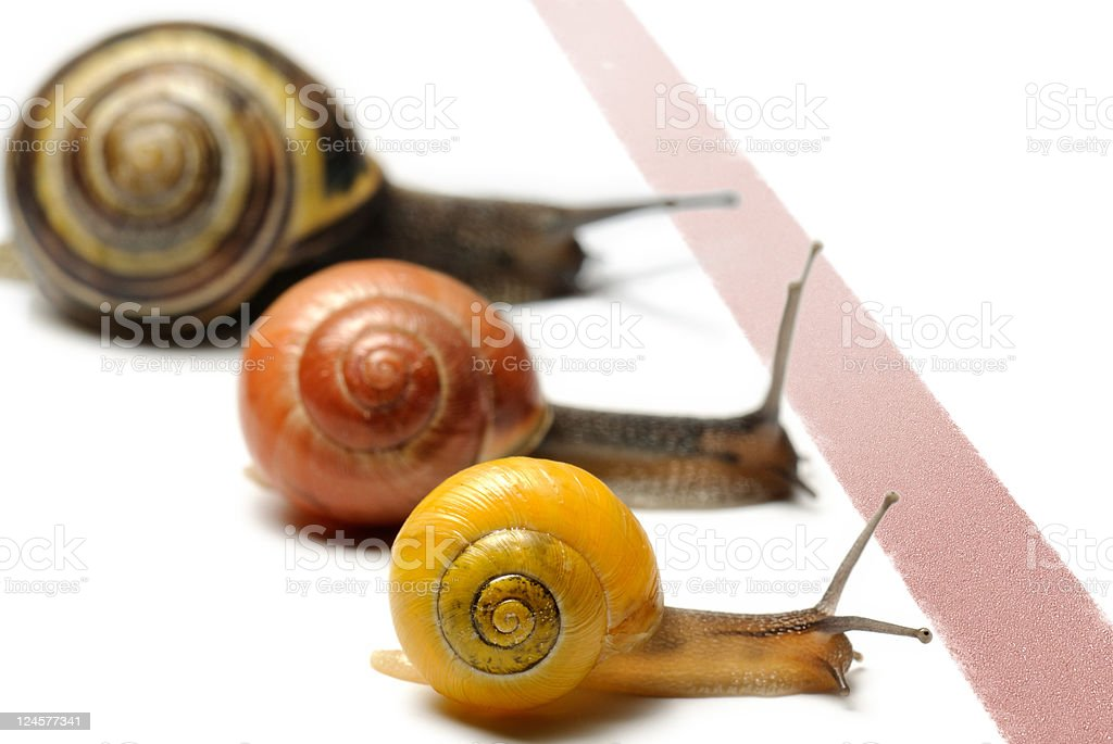 Snail racing royalty-free stock photo