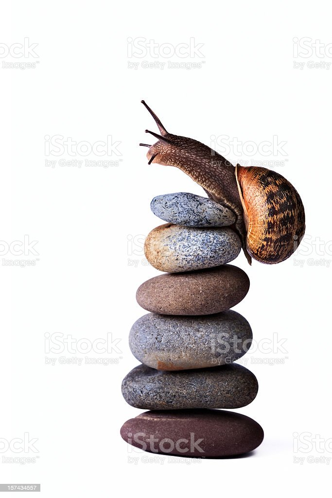 Snail reaching the top of stacked pebbles stock photo