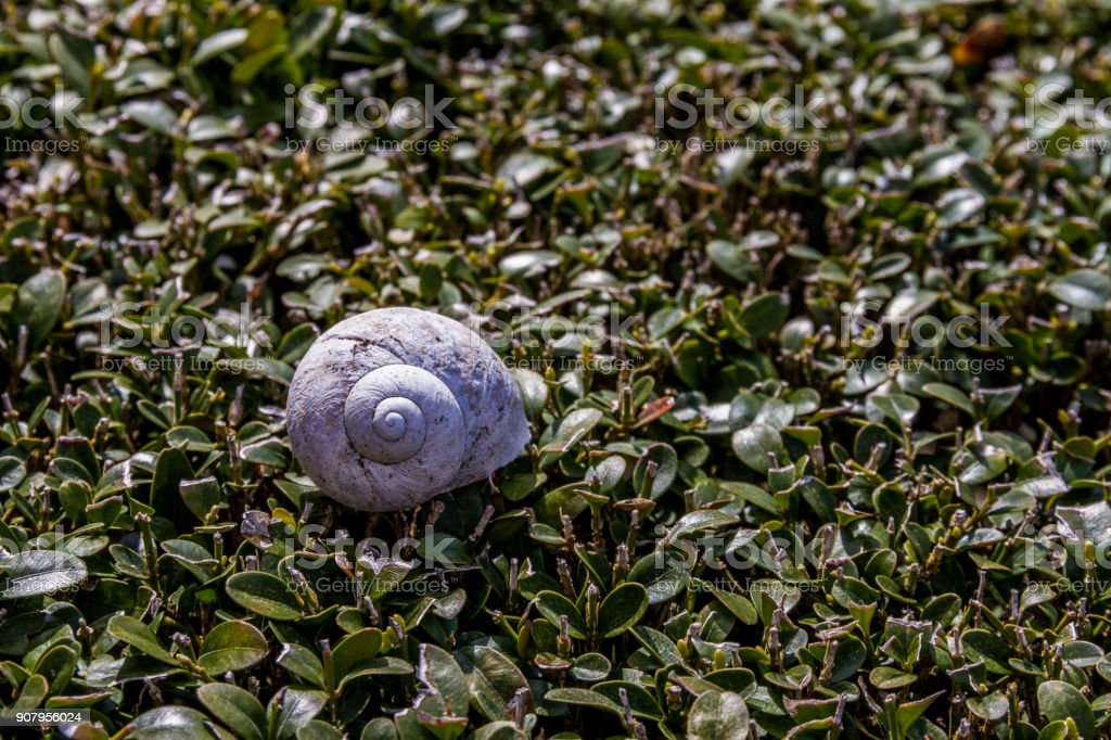 A Snail Resting On A Green Hedge stock photo
