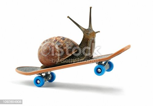 snail riding a skateboard, front wheels in the air. set in white surrounding. Digitally composed.
